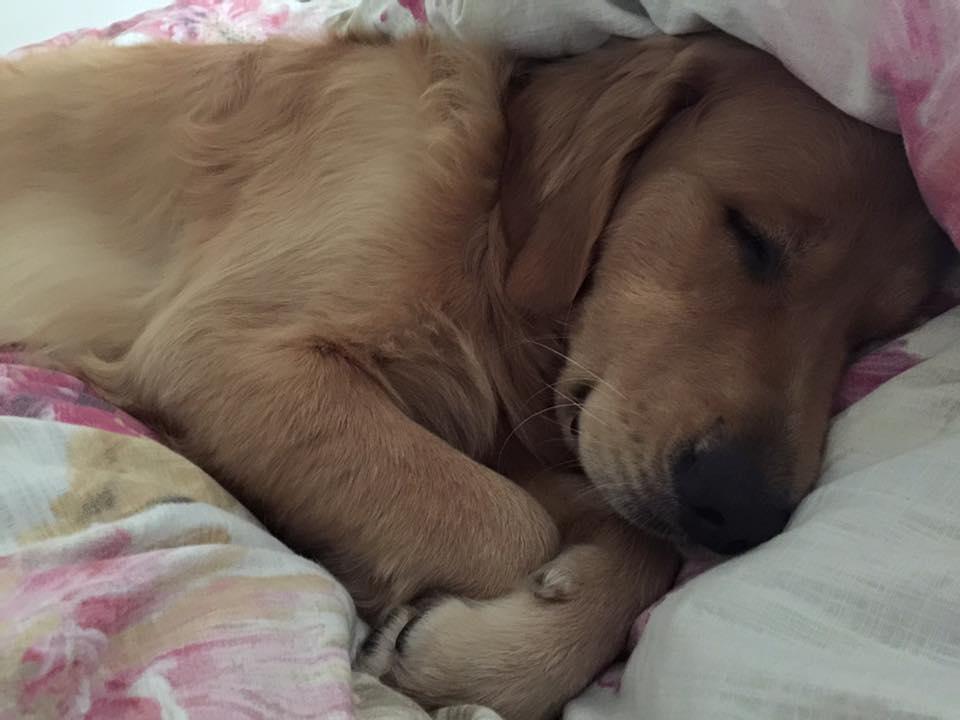 buddy sleeping